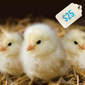 freethechildren chicks