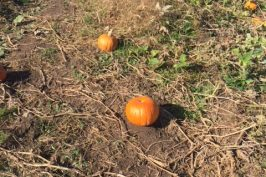 Around Ottawa: Visiting Proulx Farm Pumpkin Fest