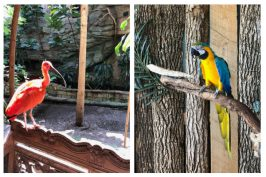 Family Travel: Bird Kingdom in Niagara Falls, Ontario